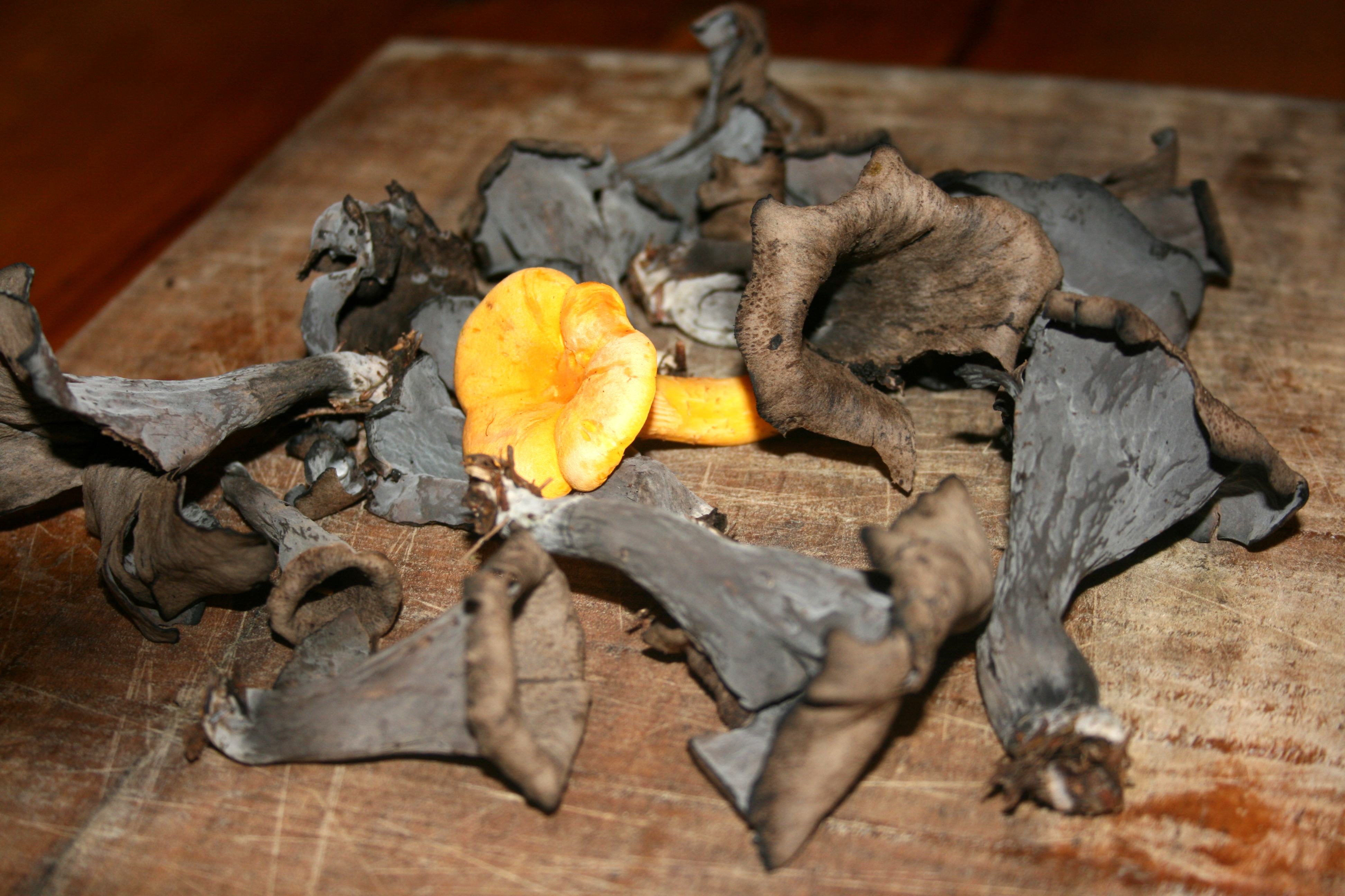 chanterelle and black trumpets