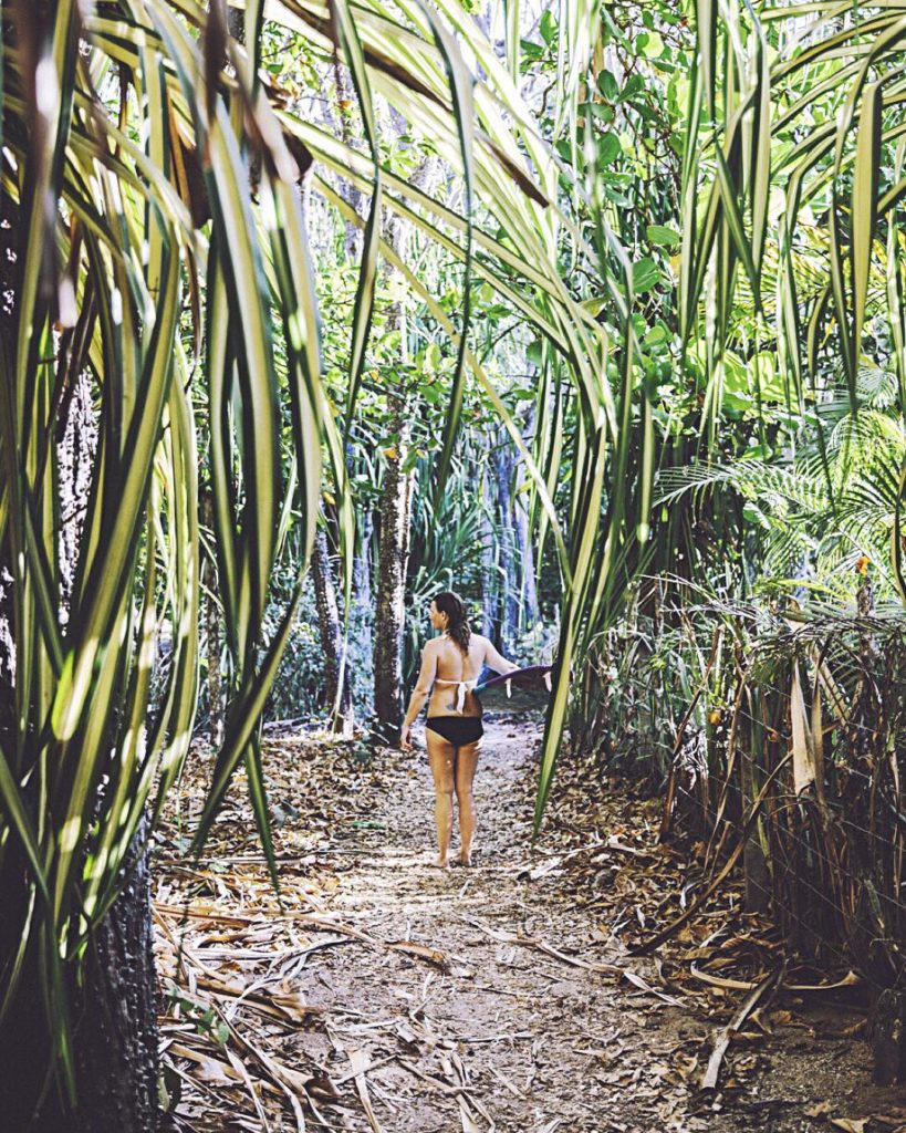 Costa Rica jungle path